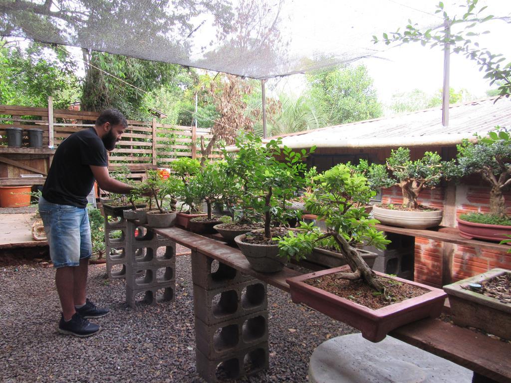 Quintal do Lucas, onde cultiva suas árvores. Foto: Marcos Demeneghi