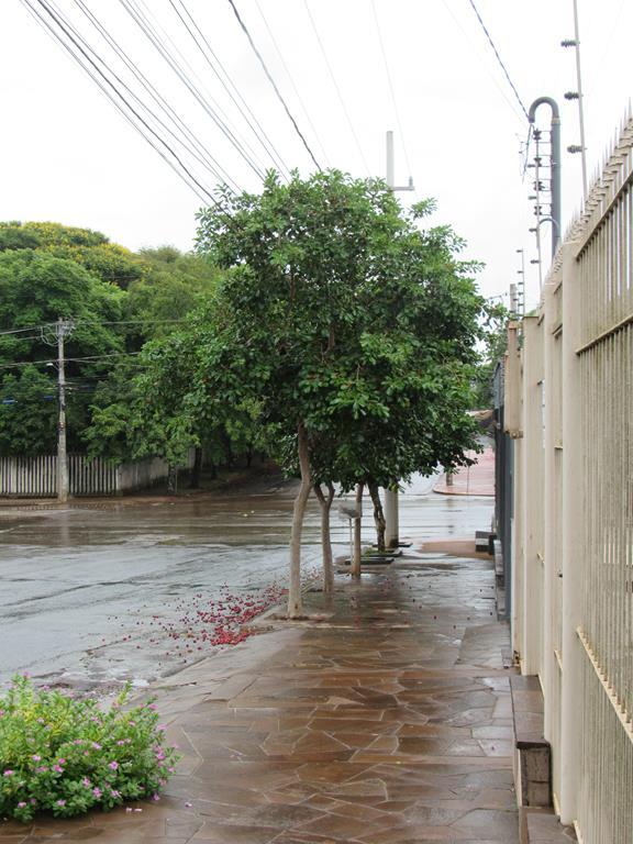 Estes araçás estão localizados na zona norte de Santo Ângelo, na Rua Marechal Floriano