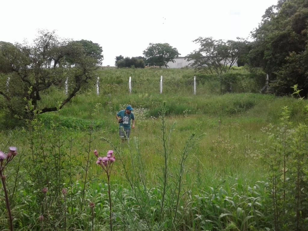 Típicas áreas de estudo, onde Peter Aguiar realiza o trabalho de observação das herbáceas - Foto de arquivo pessoal do biólogo
