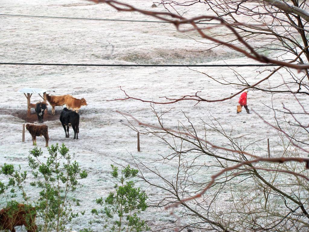 Geada no Rio Grande do Sul - Fotos: Marcos Demeneghi