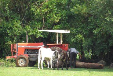 Produção-leiteira-Vacas-3-Copy-370x250.jpg