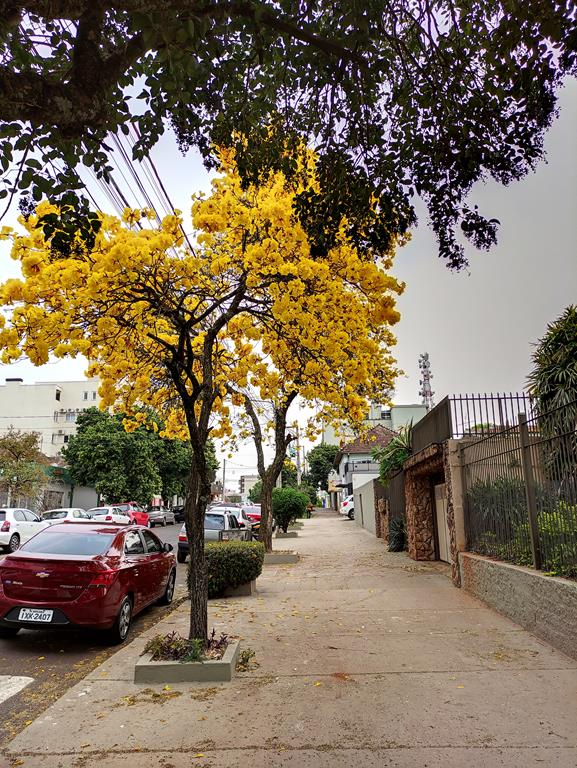 Rua XV de Novembro - Foto Marcos Demeneghi