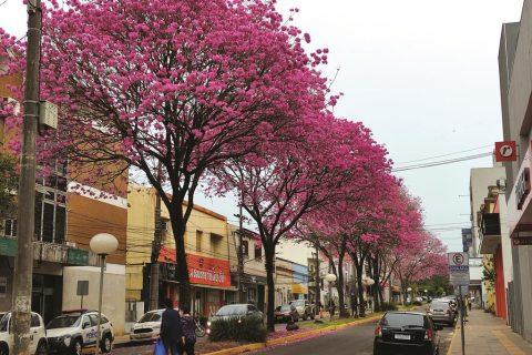 Foto: Marcos Demeneghi - Rua Três de Outubro em Santo Ângelo