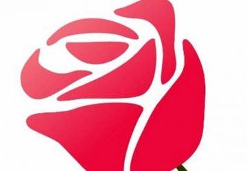 Flor-da-liga-feminina-de-combate-ao-cancer-2-Copy-360x250.jpg