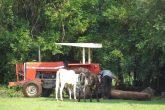 Produção leiteira - Vacas (3) (Copy)